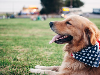 Dog with American flag scarf